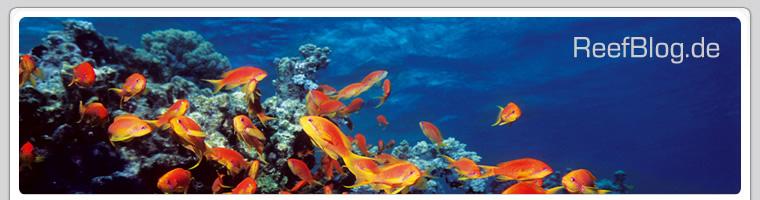 ReefBlog.de - live Meerwasser Aquarium